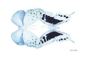 Miss Butterfly Duo Euploanthus - X-Ray White Edition by Philippe Hugonnard