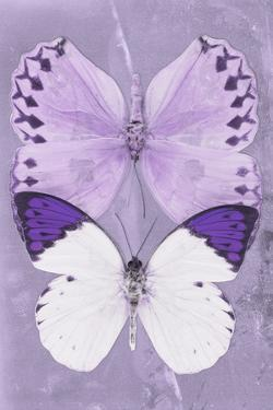 Miss Butterfly Duo Formoia II - Mauve by Philippe Hugonnard