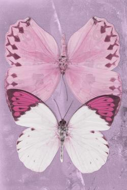 Miss Butterfly Duo Formoia II - Pink by Philippe Hugonnard