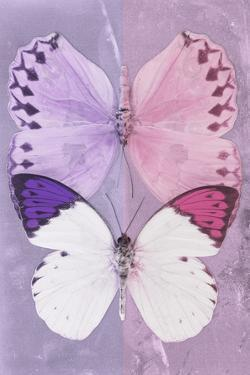 Miss Butterfly Duo Formoia - Mauve & Pink by Philippe Hugonnard