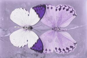 Miss Butterfly Duo Formoia - Mauve by Philippe Hugonnard