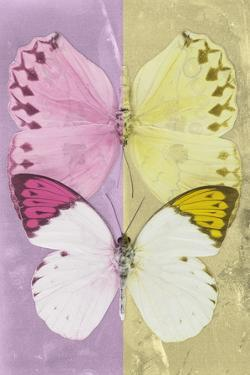 Miss Butterfly Duo Formoia - Pink & Yellow by Philippe Hugonnard