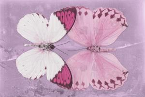 Miss Butterfly Duo Formoia - Pink by Philippe Hugonnard