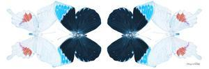 Miss Butterfly Duo Hermosana Pan - X-Ray White Edition II by Philippe Hugonnard