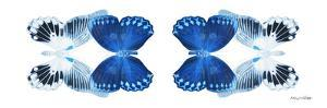 Miss Butterfly Duo Memhowqua Pan - X-Ray White Edition by Philippe Hugonnard