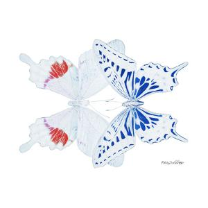 Miss Butterfly Duo Parisuthus Sq - X-Ray White Edition by Philippe Hugonnard