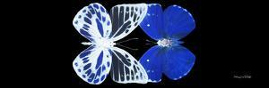 Miss Butterfly Duo Priopomia Pan - X-Ray Black Edition by Philippe Hugonnard