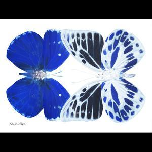 Miss Butterfly Duo Priopomia Sq - X-Ray B&W Edition by Philippe Hugonnard
