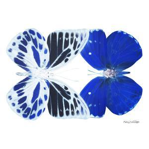 Miss Butterfly Duo Priopomia Sq - X-Ray White Edition by Philippe Hugonnard