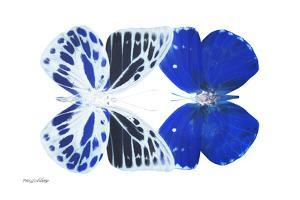 Miss Butterfly Duo Priopomia - X-Ray White Edition by Philippe Hugonnard