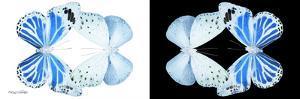 Miss Butterfly Duo Salateuploea Pan - X-Ray B&W Edition by Philippe Hugonnard