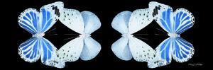 Miss Butterfly Duo Salateuploea Pan - X-Ray Black Edition II by Philippe Hugonnard