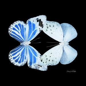 Miss Butterfly Duo Salateuploea Sq - X-Ray Black Edition by Philippe Hugonnard