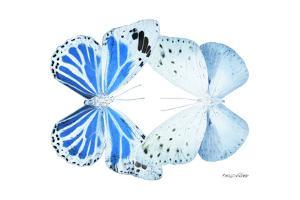 Miss Butterfly Duo Salateuploea - X-Ray White Edition by Philippe Hugonnard