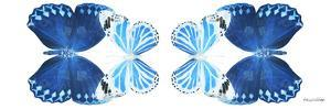 Miss Butterfly Duo Stichatura Pan - X-Ray White Edition II by Philippe Hugonnard