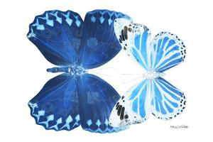 Miss Butterfly Duo Stichatura - X-Ray White Edition by Philippe Hugonnard