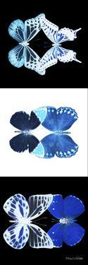 Miss Butterfly Duo X-Ray Pano by Philippe Hugonnard