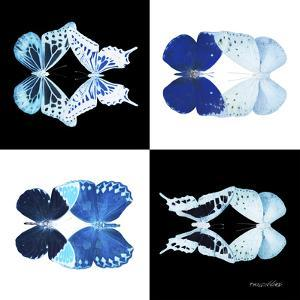 Miss Butterfly Duo X-Ray Square by Philippe Hugonnard