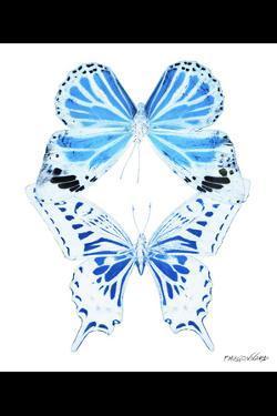 Miss Butterfly Duo Xugenutia II - X-Ray B&W Edition by Philippe Hugonnard