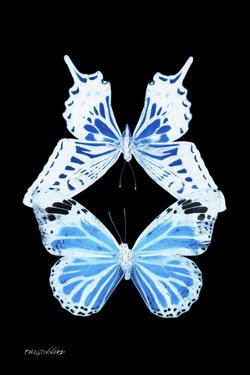 Miss Butterfly Duo Xugenutia II - X-Ray Black Edition by Philippe Hugonnard