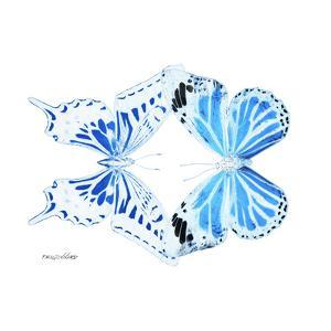 Miss Butterfly Duo Xugenutia Sq - X-Ray White Edition by Philippe Hugonnard
