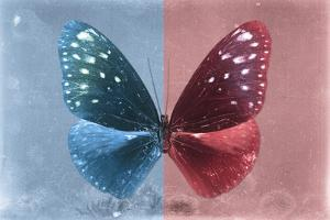 Miss Butterfly Euploea - Blue & Red by Philippe Hugonnard