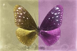 Miss Butterfly Euploea - Gold & Hot Pink by Philippe Hugonnard
