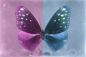 Miss Butterfly Euploea - Hot Pink & Blue by Philippe Hugonnard