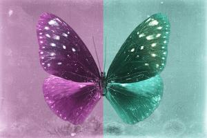 Miss Butterfly Euploea - Hot Pink & Coral Green by Philippe Hugonnard