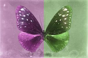 Miss Butterfly Euploea - Hot Pink & Green by Philippe Hugonnard