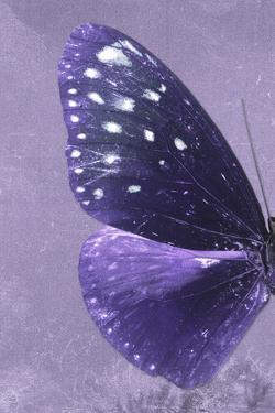 Miss Butterfly Euploea Profil - Purple by Philippe Hugonnard