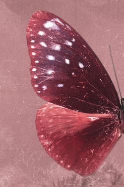 Miss Butterfly Euploea Profil - Red by Philippe Hugonnard