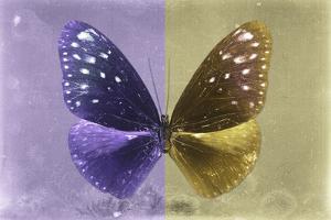 Miss Butterfly Euploea - Purple & Gold by Philippe Hugonnard