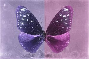 Miss Butterfly Euploea - Purple & Hot Pink by Philippe Hugonnard