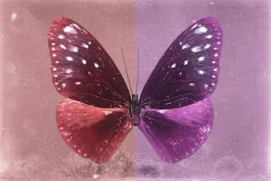 Miss Butterfly Euploea - Red & Hot Pink by Philippe Hugonnard