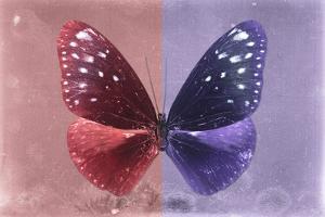 Miss Butterfly Euploea - Red & Purple by Philippe Hugonnard