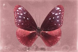 Miss Butterfly Euploea - Red by Philippe Hugonnard