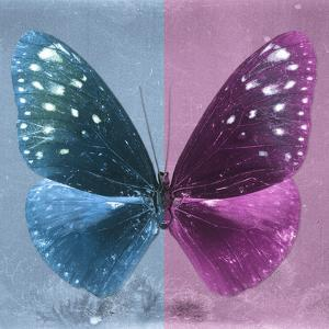 Miss Butterfly Euploea Sq - Blue & Hot Pink by Philippe Hugonnard