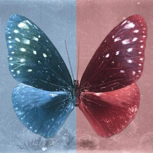 Miss Butterfly Euploea Sq - Blue & Red by Philippe Hugonnard