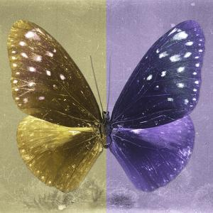Miss Butterfly Euploea Sq - Gold & Purple by Philippe Hugonnard