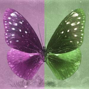 Miss Butterfly Euploea Sq - Hot Pink & Green by Philippe Hugonnard