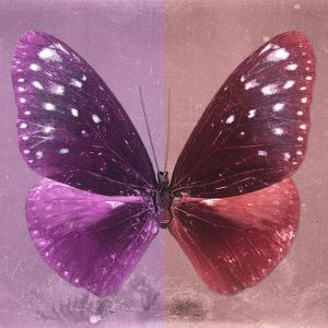 Miss Butterfly Euploea Sq - Hot Pink & Red by Philippe Hugonnard