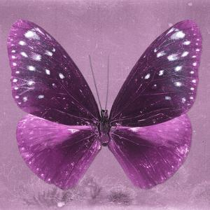 Miss Butterfly Euploea Sq - Hot Pink by Philippe Hugonnard