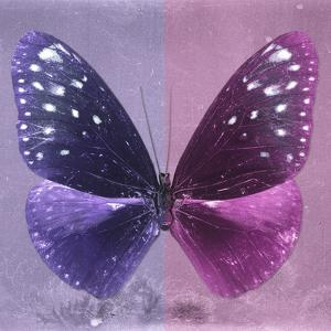 Miss Butterfly Euploea Sq - Purple & Hot Pink by Philippe Hugonnard