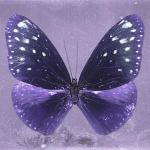 Miss Butterfly Euploea Sq - Purple by Philippe Hugonnard