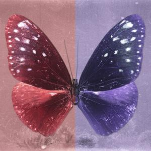 Miss Butterfly Euploea Sq - Red & Purple by Philippe Hugonnard