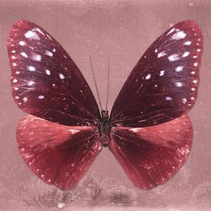Miss Butterfly Euploea Sq - Red by Philippe Hugonnard