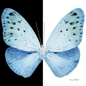 Miss Butterfly Euploea Sq - X-Ray B&W Edition by Philippe Hugonnard