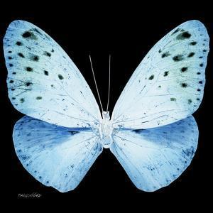 Miss Butterfly Euploea Sq - X-Ray Black Edition by Philippe Hugonnard