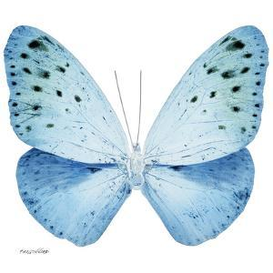 Miss Butterfly Euploea Sq - X-Ray White Edition by Philippe Hugonnard